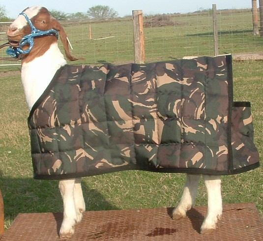 R9 Custom Horse Creations, Goat Sheets And Winter Blankets